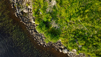 Weeds and Rocks | Larus Lake, Ontario, Canada