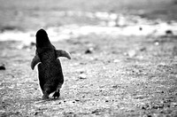 Away | Deception Island, Antarctica