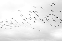 The Flock Above | The Drake Passage, Antarctica