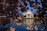 Jefferson in Spring | Washington, DC